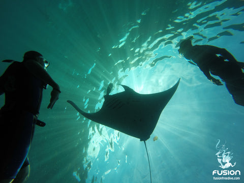 Freedive Manta Trip - Fusion Freedive and Spearfishing