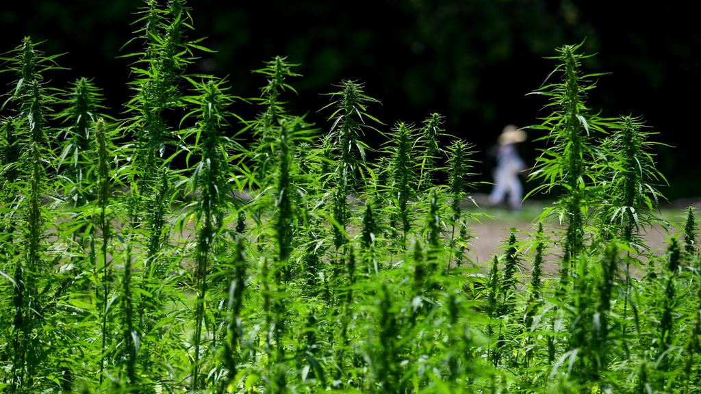 How Hemp Can Supercharge The Construction Industry's Sustainability