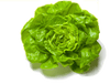 Local Lettuce- Butter Leaf