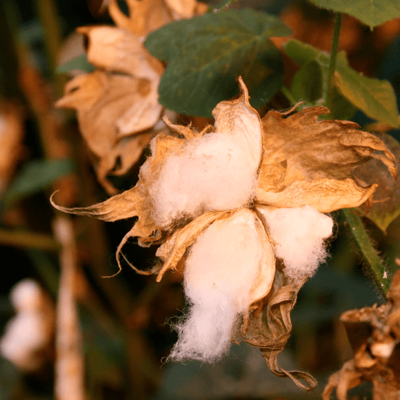 Cotton: Nankeen
