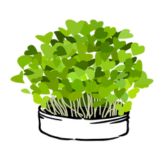 Microgreen Illustration