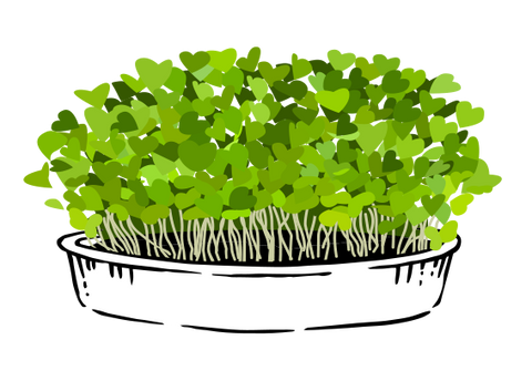 What are Microgreens