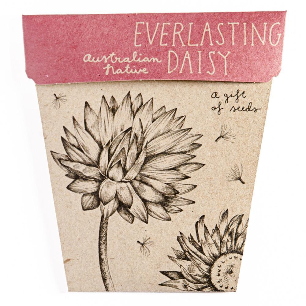 SOW 'N SOW Gift of Seeds - Everlasting Daisy