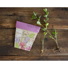 Load image into Gallery viewer, SOW 'N SOW Gift of Seeds - Sweet Pea
