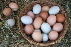 Poultry - Washed Farm Fresh Eggs (Large Brown) 3 DOZEN