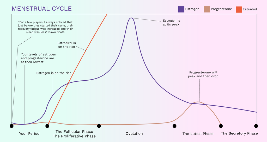 Menstrual cycle infographic