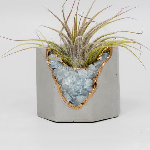 geode rock and air plant