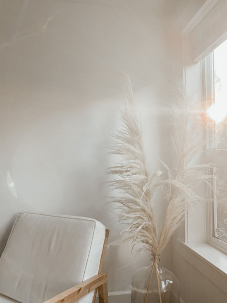 Pampas grass and a glass vase in a sunny, white room. Minimalist inspiration for dried florals and pampas grass