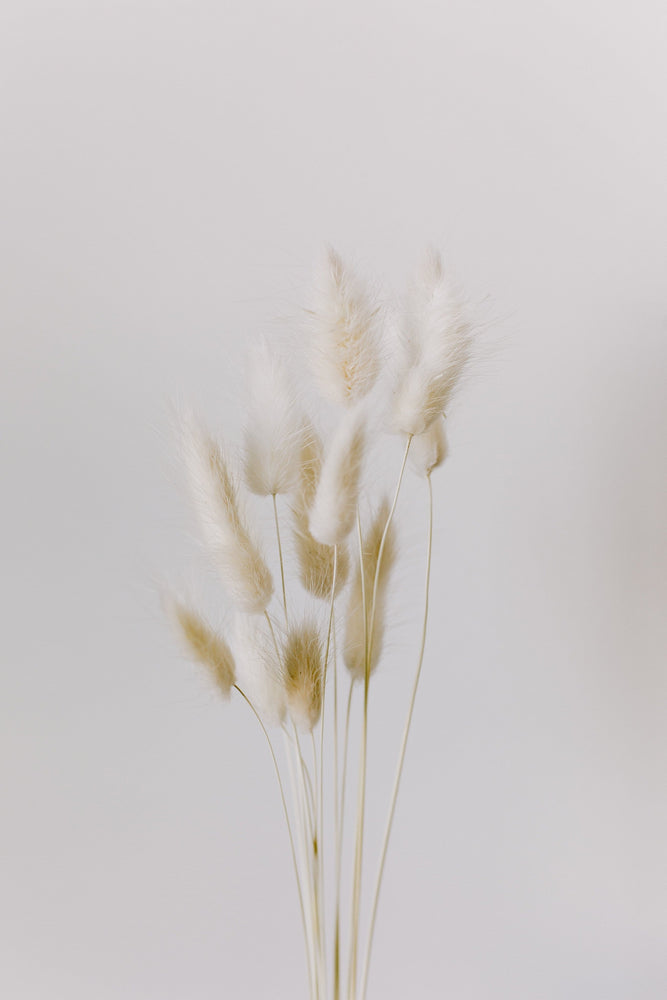 Load image into Gallery viewer, Bleached Bunny Tails - Golden August