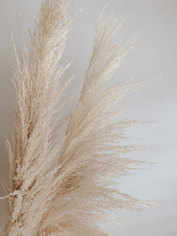 Load image into Gallery viewer, Golden Hour Pampas (5 stem) - Golden August