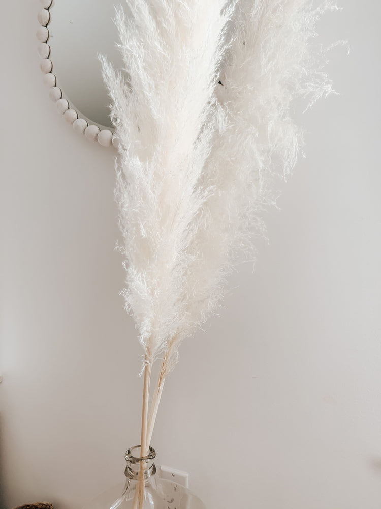 Sun Bleached Pampas Grass - Golden August