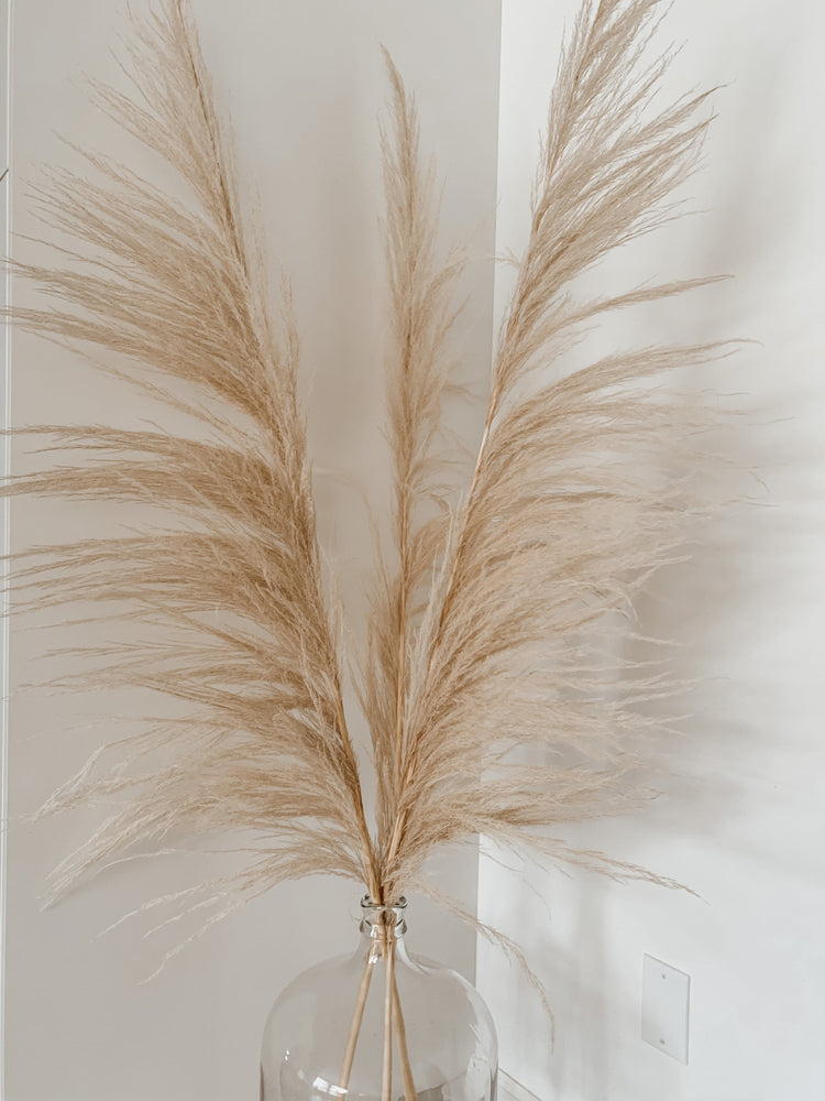 Golden Sand Pampas Grass