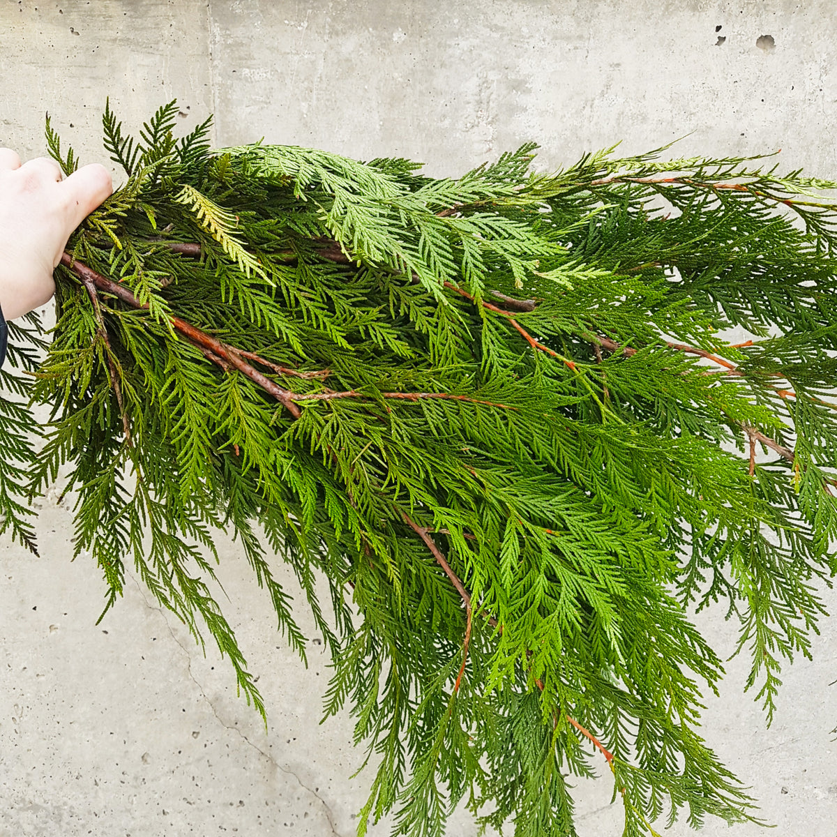Winter Evergreen Assortment