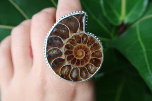 Large Ammonite Statement Ring