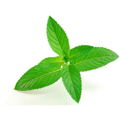 Spearmint Essential Oil 15ml