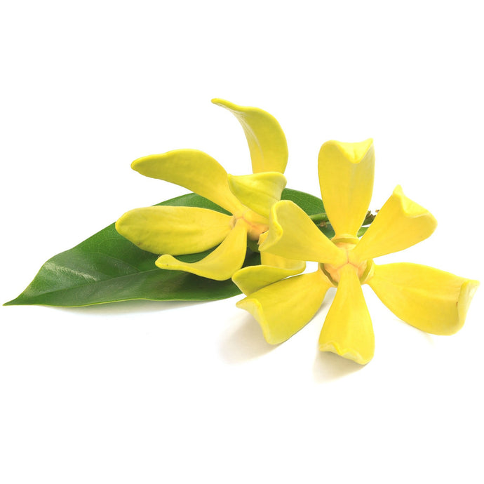 Ylang Ylang Essential Oil 15ml