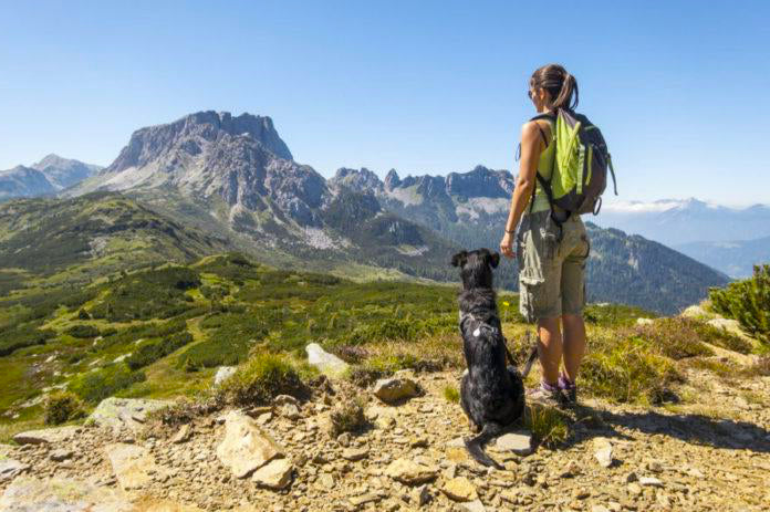 How to keep your dog happy and safe on a hike