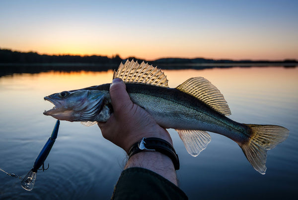 For amazing bass fishing on Sam Rayburn Reservoir, be sure you pack all the essential items to make your trip the best.