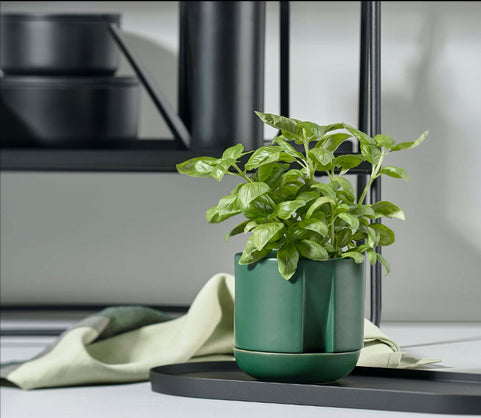 Tips for Growing Kitchen Herbs in the Home