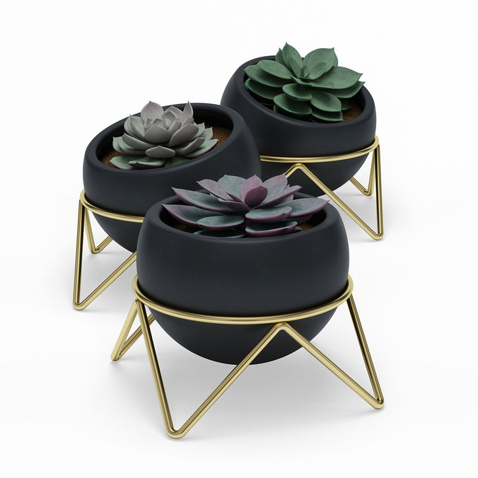 Umbra Potsy Planter Set of 3, Black/Brass