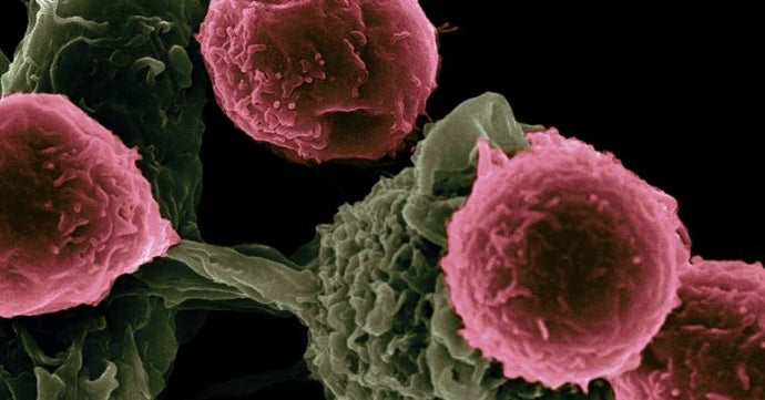 Breast Milk Substance Kills Cancer Cells According to Research