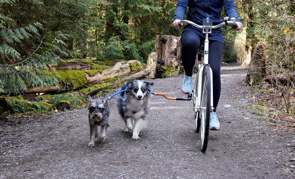 Dog Coupler for Biking and Walking