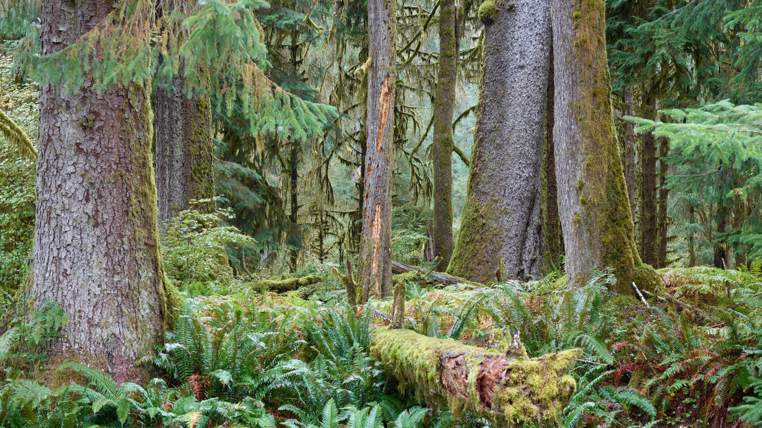 Hoh Rainforest, Washington State