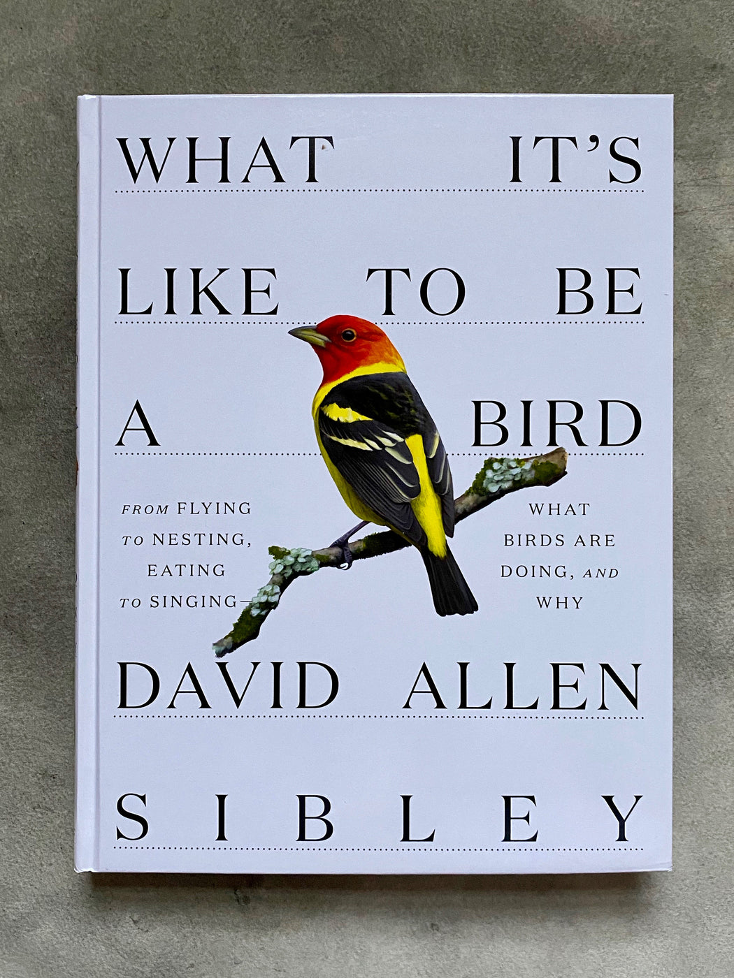 """What It's Like to be a Bird"" by David Allen Sibley"