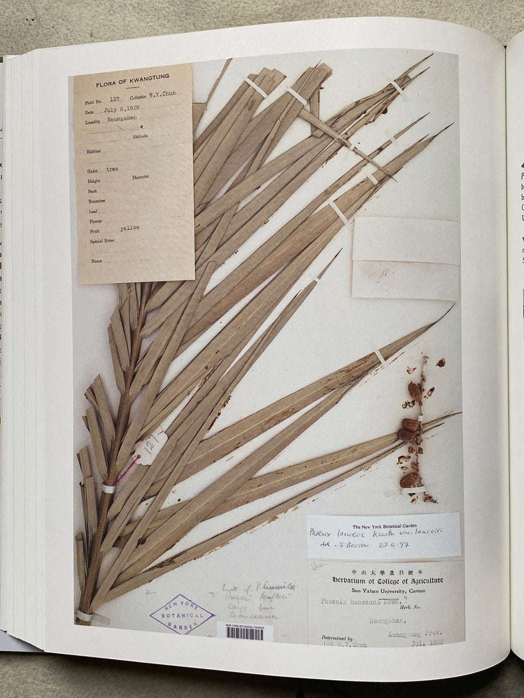 """Herbarium"" by Barbara M. Thiers"