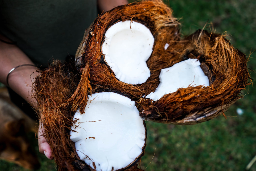INGREDIENT HIGHLIGHT: Coconut Oil
