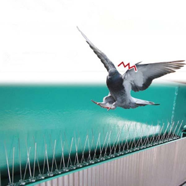 Stainless Steel Protection Against Bird Spines