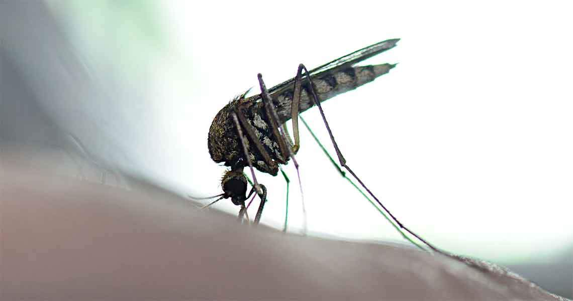The Science of Mosquito Abatement