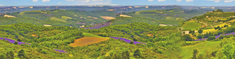 This is a panoramic photo of rolling hills in Southern France. There are patches of lavendar visible. It is a sunny day with fluffy little clouds.