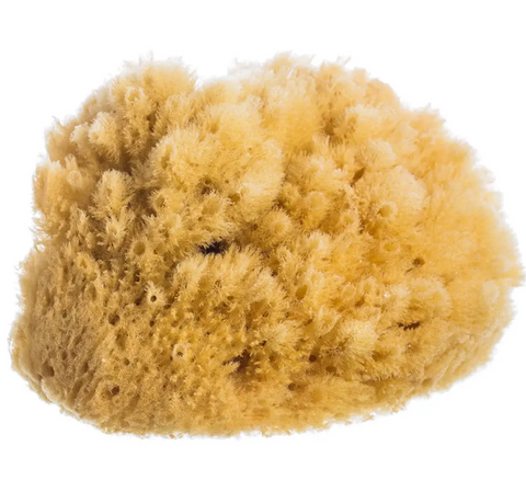 Pictured is a natural sea sponge. It is irregular in texture and has a yellowish color. It is dry and soft.