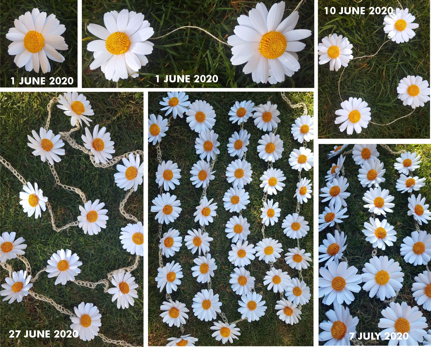 Diary of The Daisy Chain - Chain of Remembrance