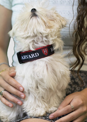 Harvard Dog Collar Black