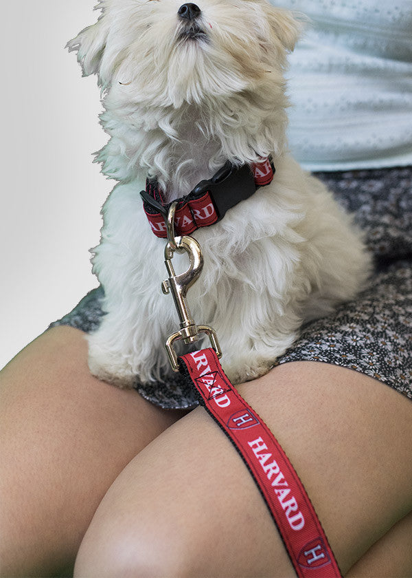 Harvard Shield Dog Leash Red