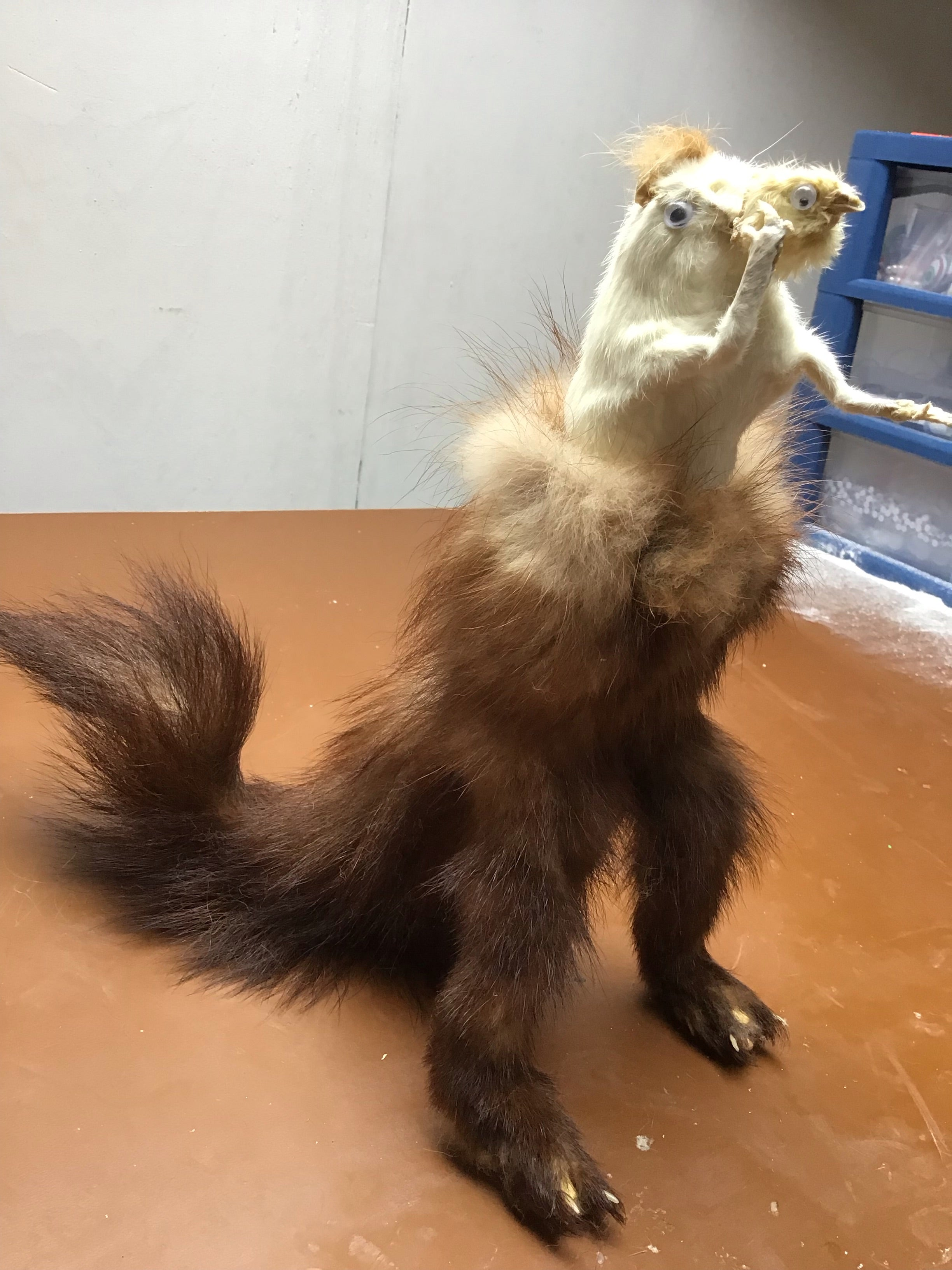 Animalgamation - Mystery Taxidermy