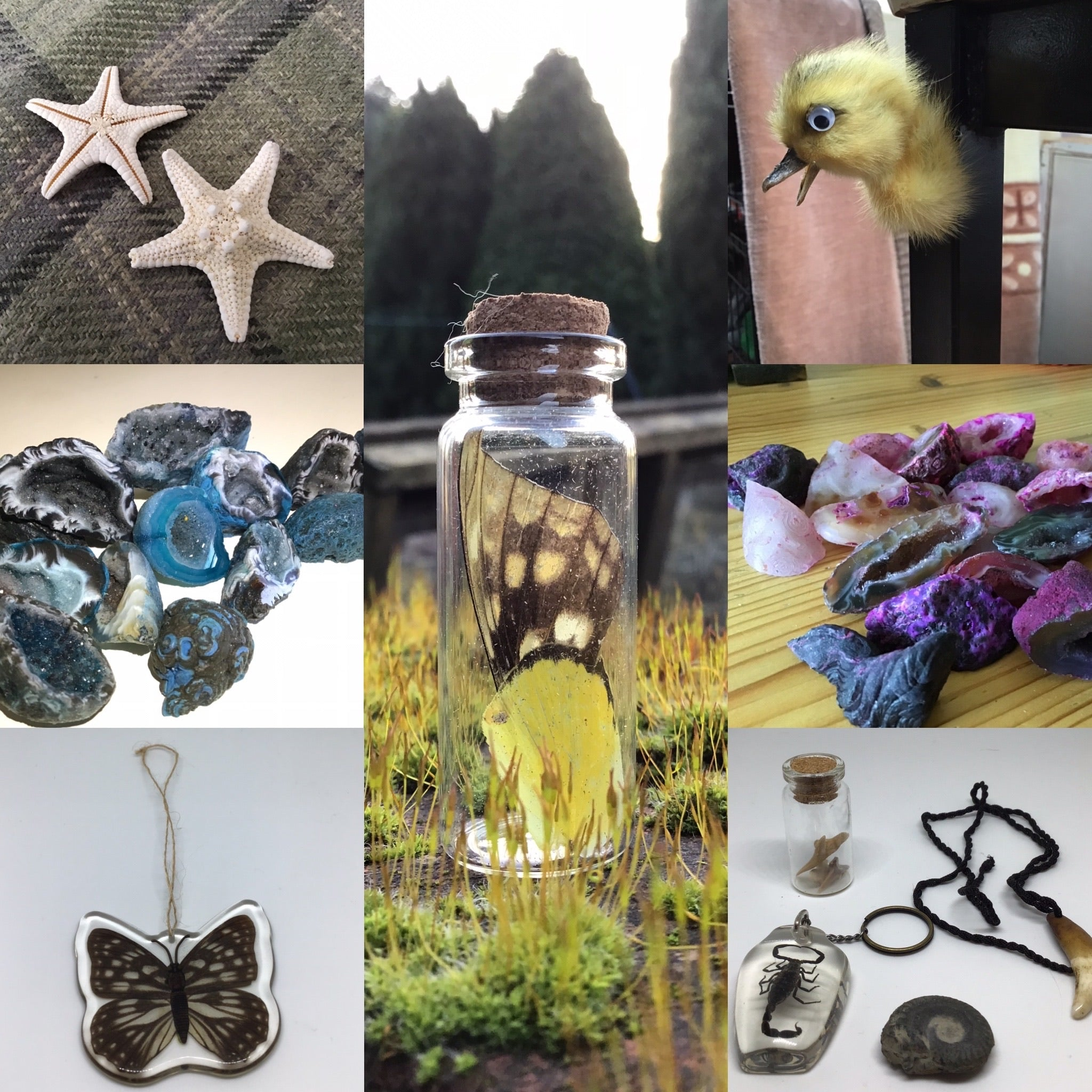 Oddities Starter Kit - A random selection of smaller Oddities
