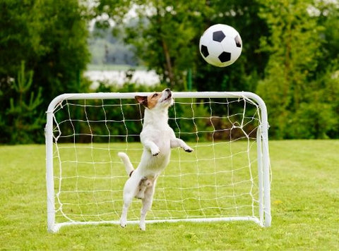 Dog being a soccer goalkeeper