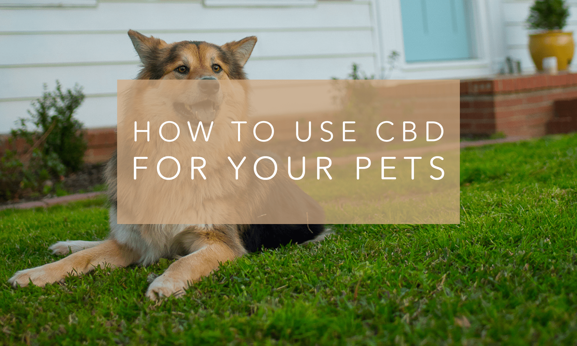 How to Use CBD for Your Pets – Relyf