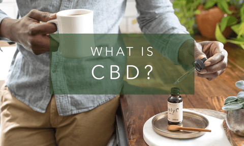 What is CBD? A Short Guide to Cannabidiol