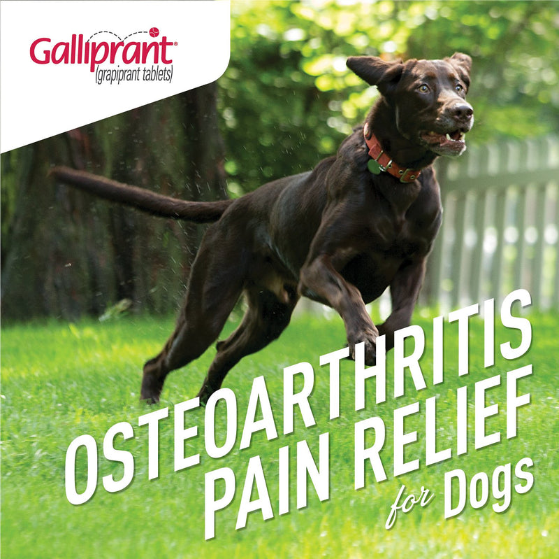 Galliprant Tablets for Dogs 30 Counts