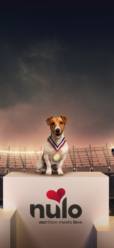 Three dogs sitting in first, second, and third place at the Olympics. Nulo Pet Food fuels your dog's inner athlete.