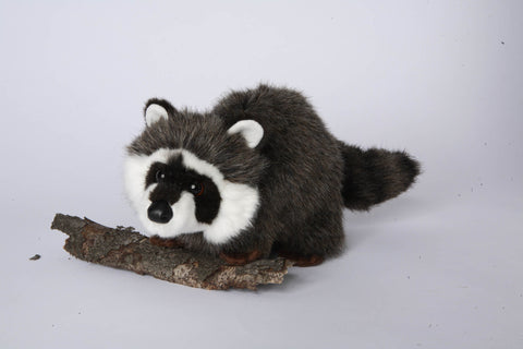 Ringwold Raccoon