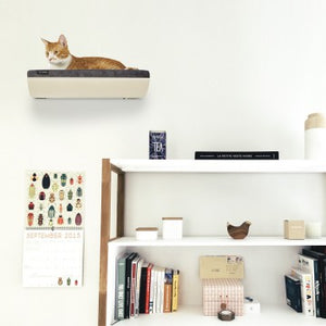 CHILL Shelf - Maple