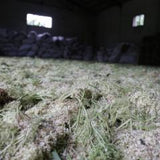drying elder flowers on floor in dark room