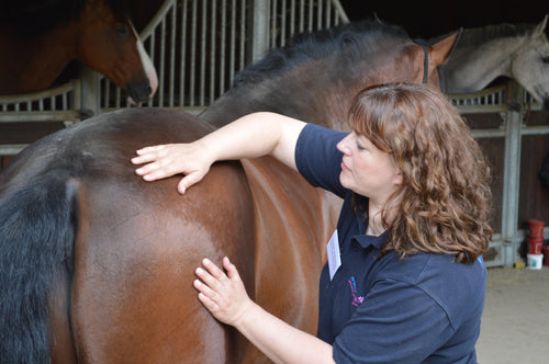 Introduction to Equine Acupressure (2 Day)