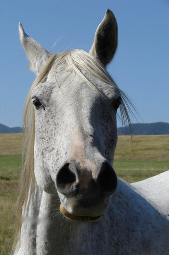 Essential Oils for Equines