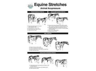 Equine Stretch Poster